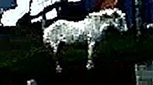 clothes-horse-c
